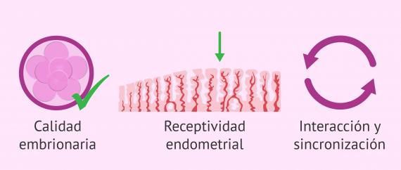 Elementos involucrados en la implantación