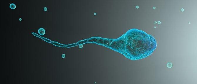 Imagen: Espermatozoides