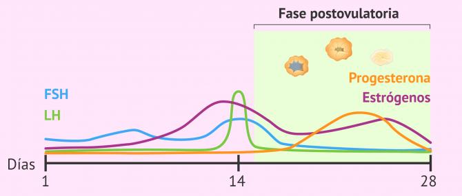 Imagen: Cambios hormonales y ováricos en fase postovulatoria