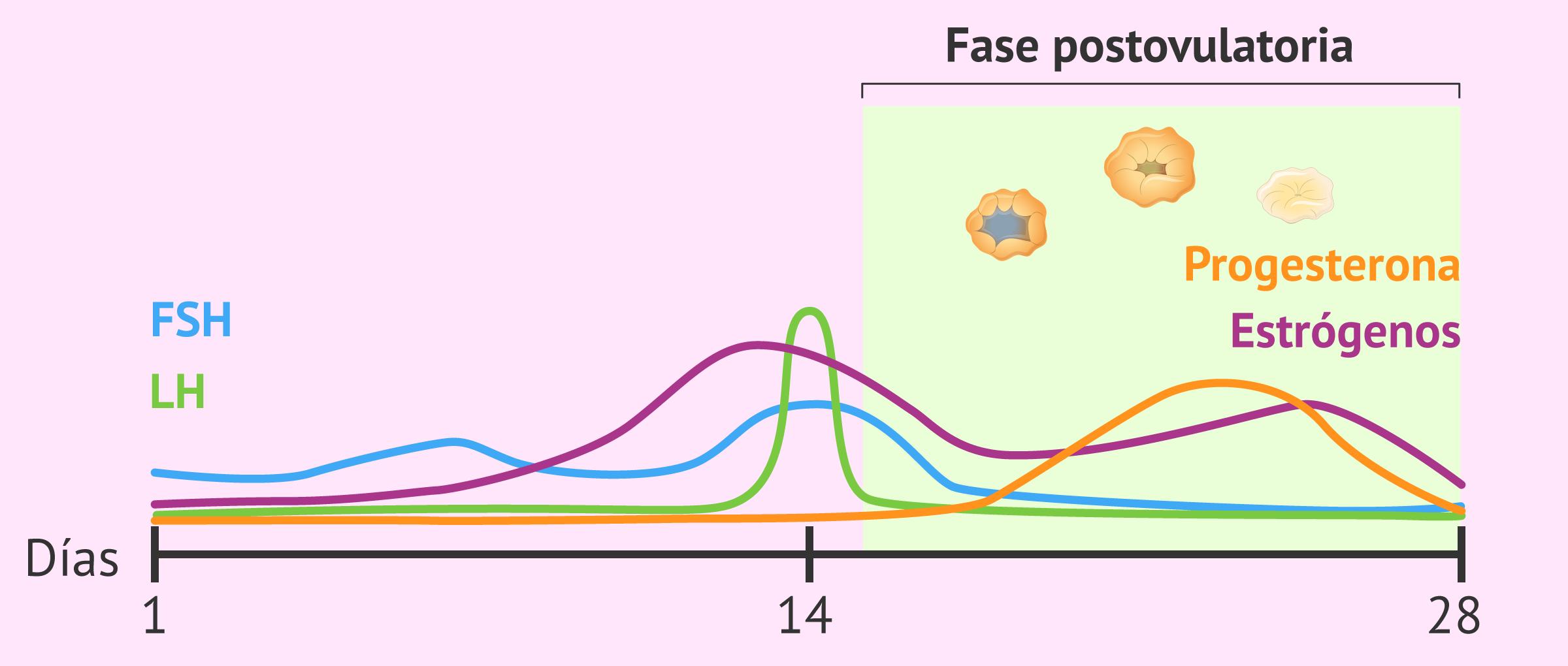 Cambios hormonales y ováricos en fase postovulatoria