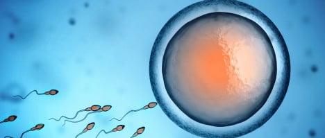 Imagen: Fecundación in vitro en IMARA