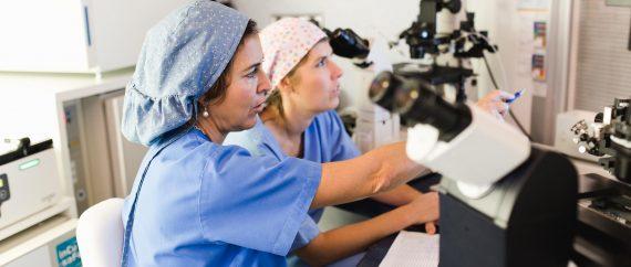 Fertilab laboratorio embriologia