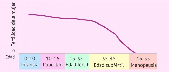 Imagen: Relación edad y periodo de periodo fértil
