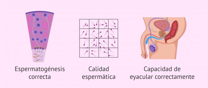 Imagen: Factores que intervienen en la fertilidad masculina