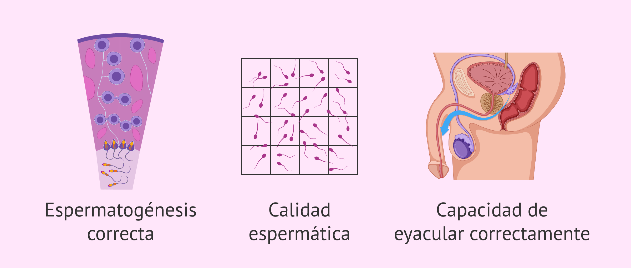 Factores que intervienen en la fertilidad masculina