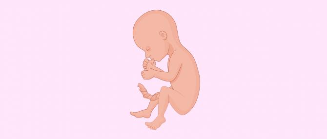 6 meses de embarazo: características y síntomas