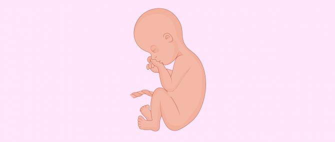 Siete meses de embarazo: síntomas y desarrollo del bebé