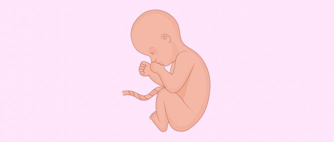 8 meses de embarazo: síntomas y cuidados