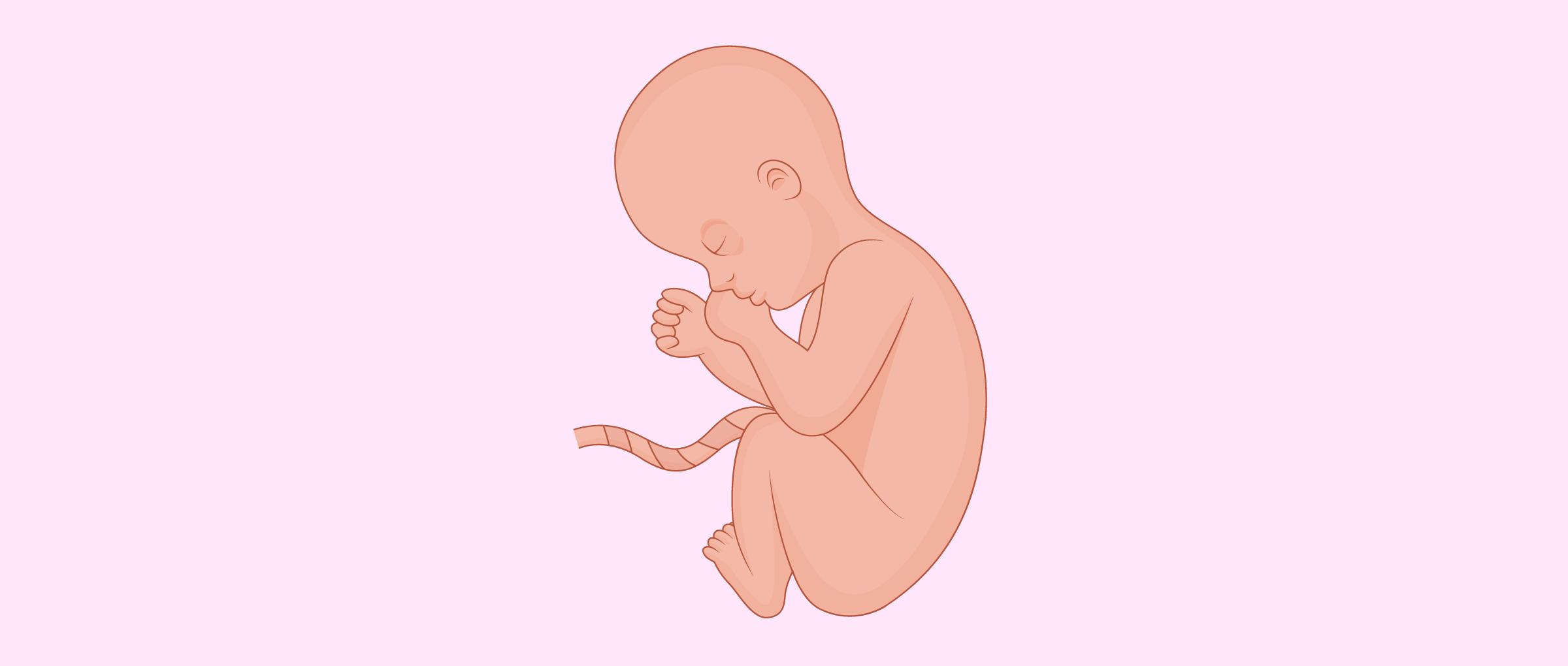 El octavo mes de embarazo
