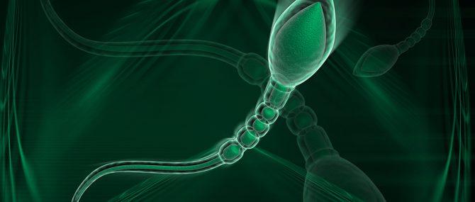 Imagen: Formación de los espermatozoides