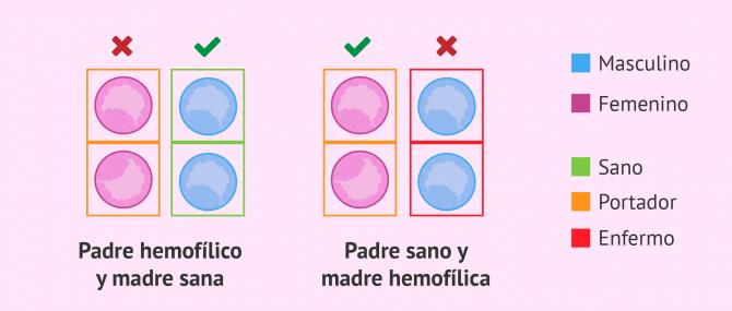 Imagen: Evitar la hemofilia