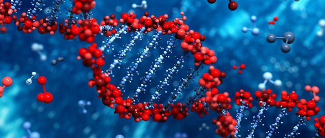 Imagen: Fragmentación del DNA embrionario
