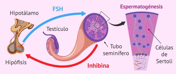 Imagen: Fármacos de FSH