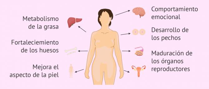 Imagen: Funciones de los estrógenos