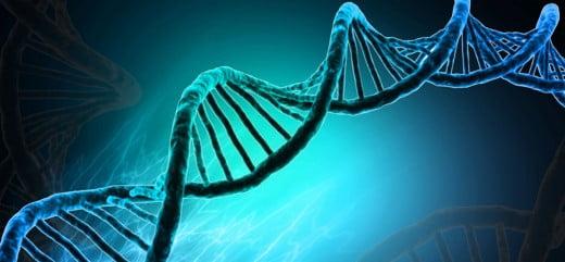 Las madres añosas tienen genes rejuvenecedores