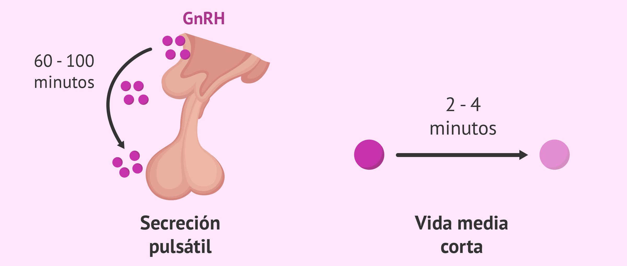Características de la GnRH