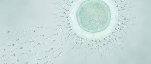 Ha cumplido 25 años el primer bebé que fue concebida por fecundación in vitro en España