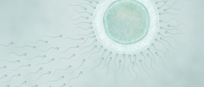 Imagen: Ha cumplido 25 años el primer bebé que fue concebida por fecundación in vitro en España