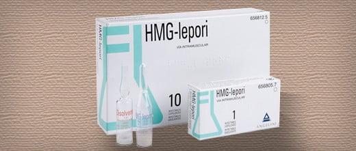 HMG lepori
