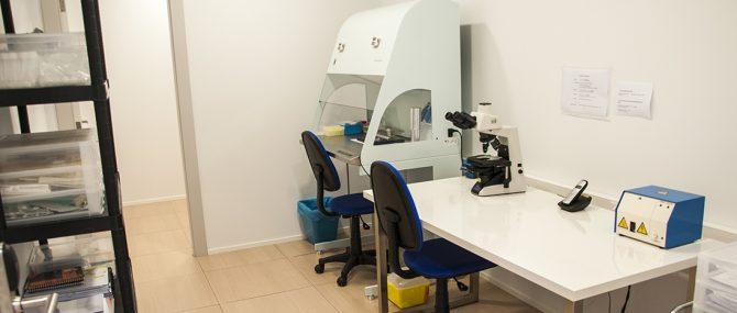 iGin laboratorio fecundacion in vitro