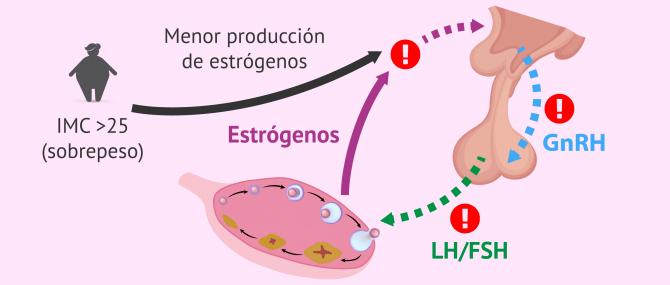 Imagen: IMC y producción hormonal