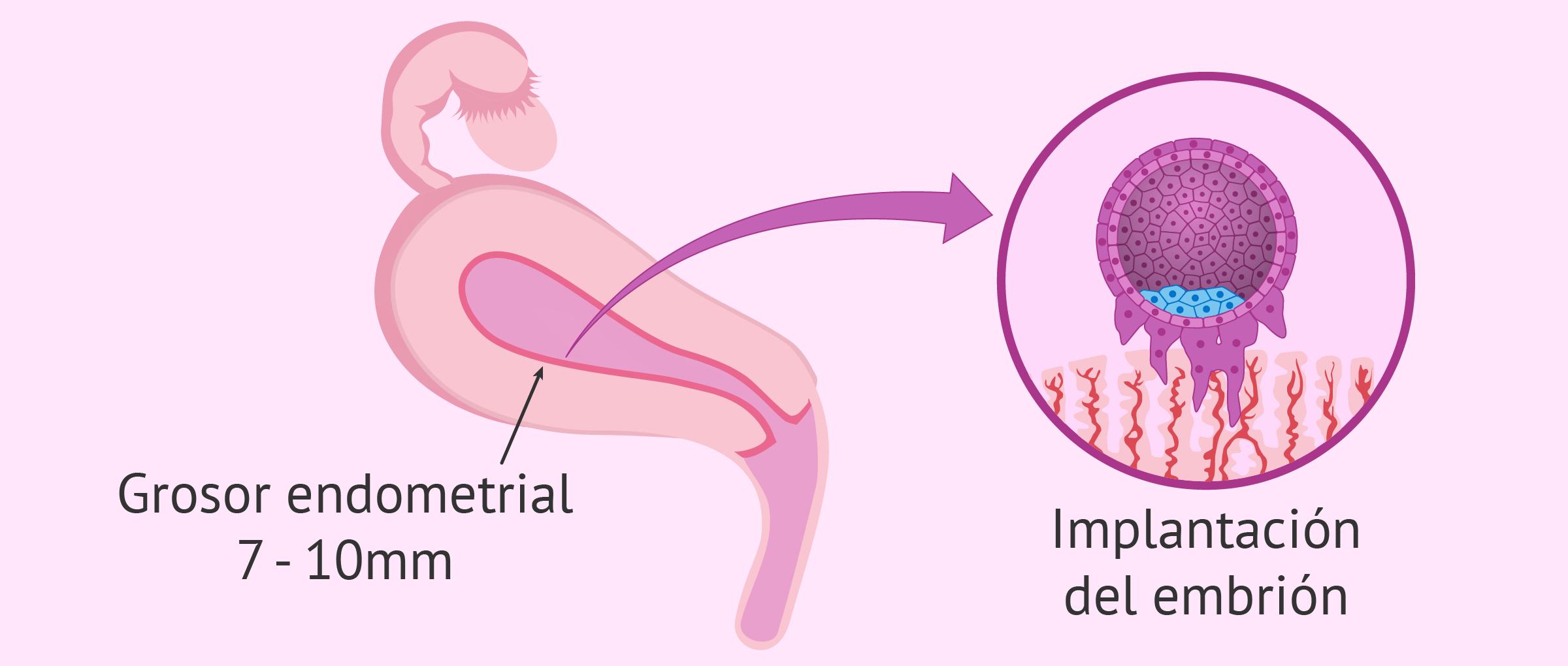 Cuanto tiempo tarda implantarse ovulo fecundado