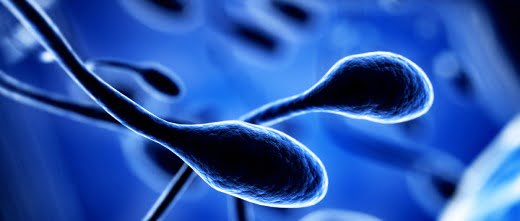 La contaminación de los ríos relacionada con la infertilidad masculina