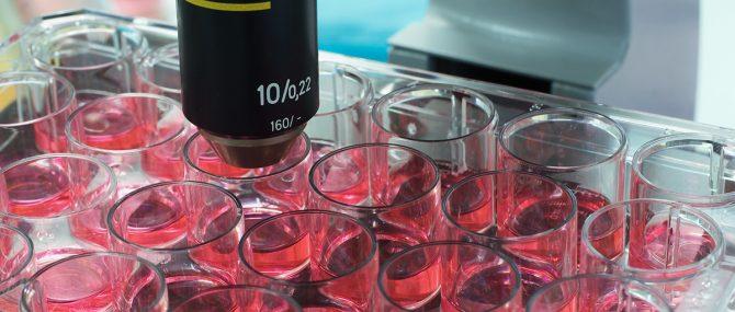 Imagen: Investigación de células madre