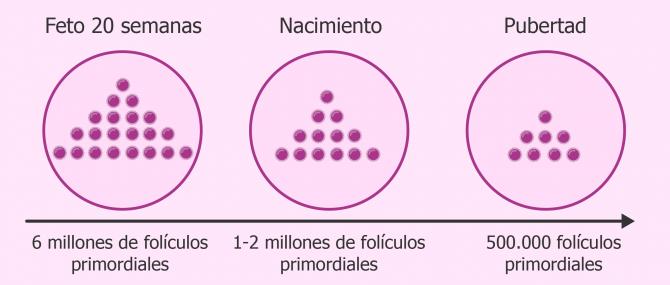 Imagen: Mediante un análisis de sangre se valora una hormona que indica el número de folículos ováricos presentes.
