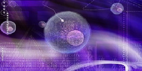 Los espermatozoides realizan complejos cálculos matemáticos