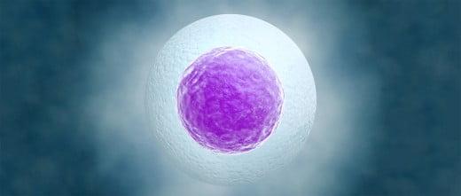 Maduración de óvulos