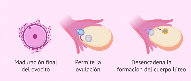 Imagen: Mecanismos de acción de Ovitrelle