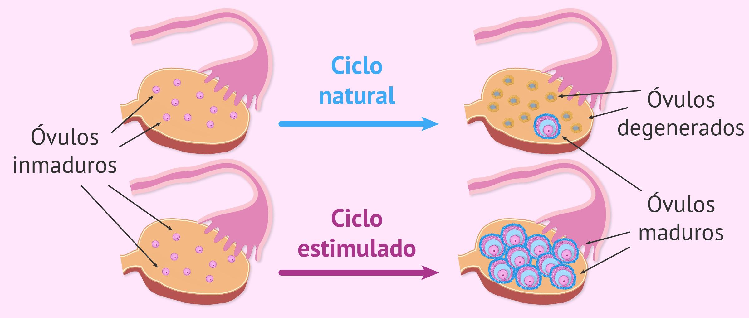 Medicamentos para la estimulación ovárica