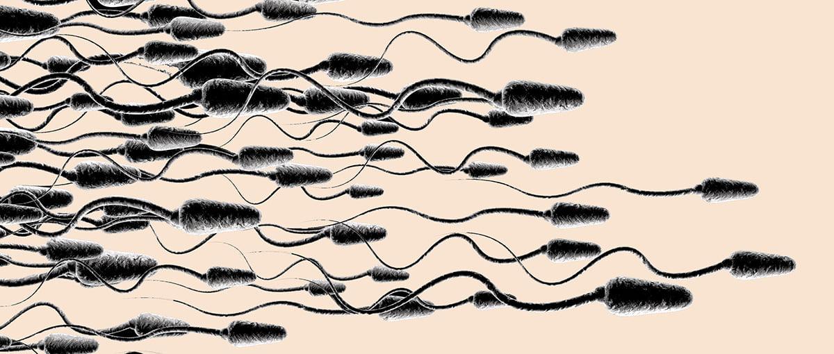 Posible mejoría de la calidad espermática tras la toma de Maca Andina