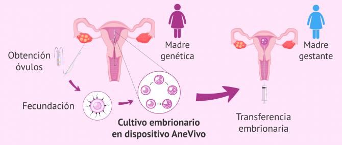 Imagen: AneVivo para maternidad compartida