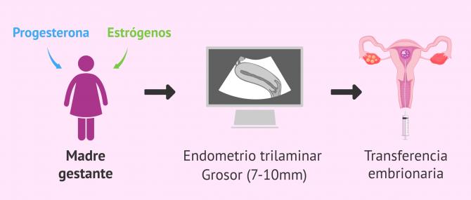 Imagen: Preparación endometrial y transferencia embrionaria
