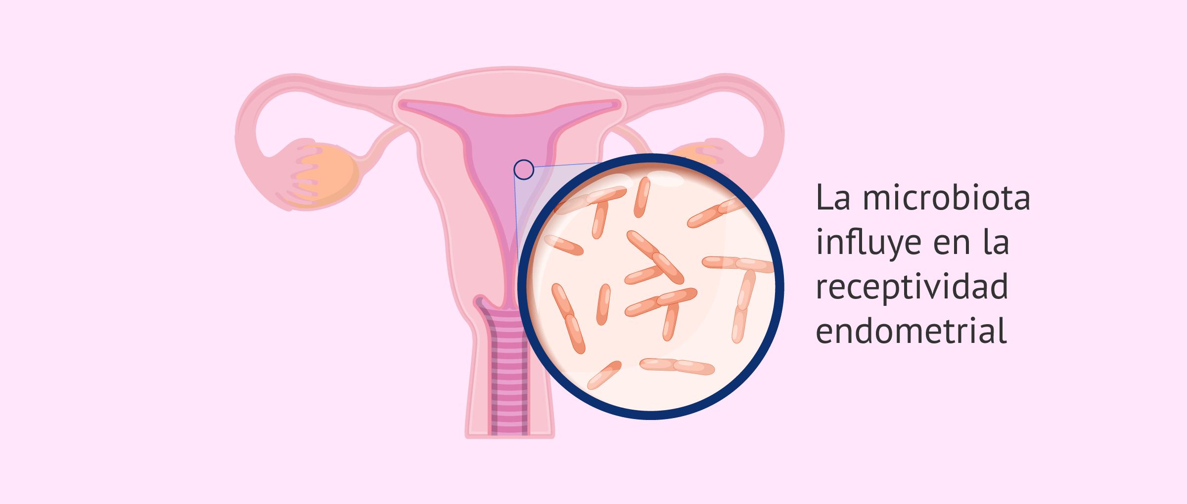 ¿Cómo influye la microbiota en la fertilidad?