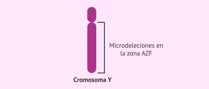 Imagen: Región AZF del cromosoma Y