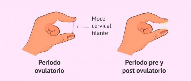 Imagen: Cambios del moco cervical durante el ciclo menstrual