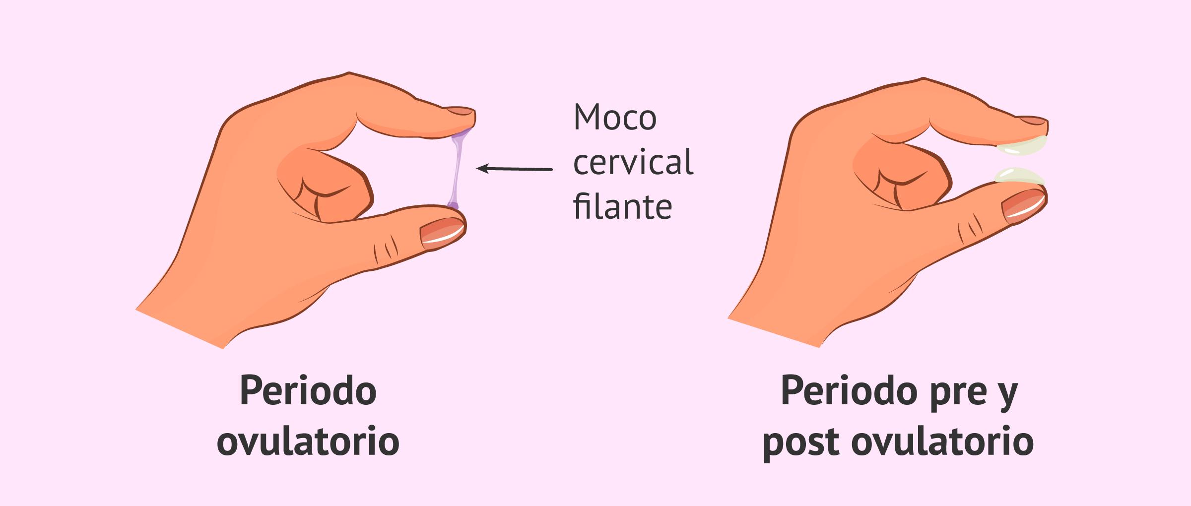 Cambios del moco cervical durante el ciclo menstrual