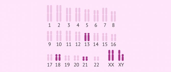 Imagen: ADN fetal en sangre de la madre