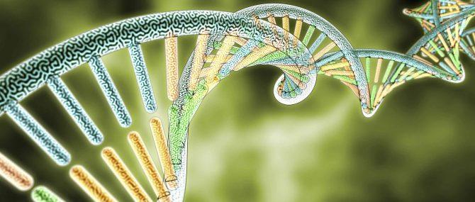 Ingeniería Genética para prevenir enfermedades de herencia materna