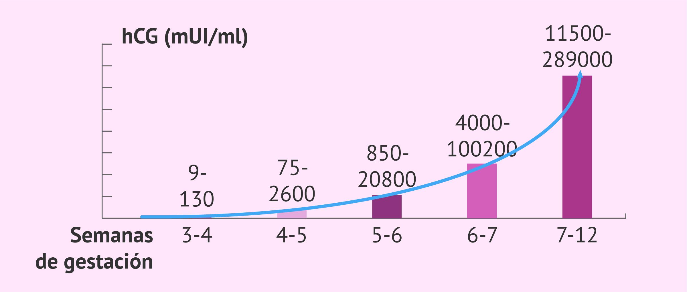 Hormona hCG en el embarazo