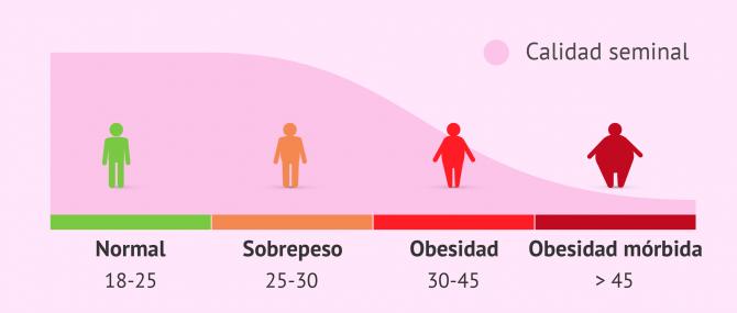 Esterilidad masculina y baja calidad del semen debido a la obesidad