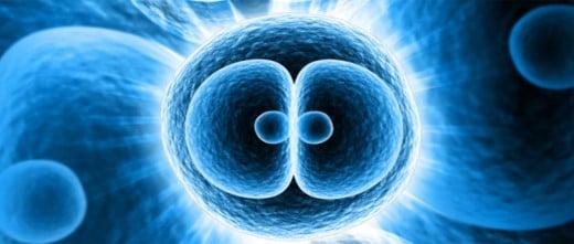 La oxidación celular