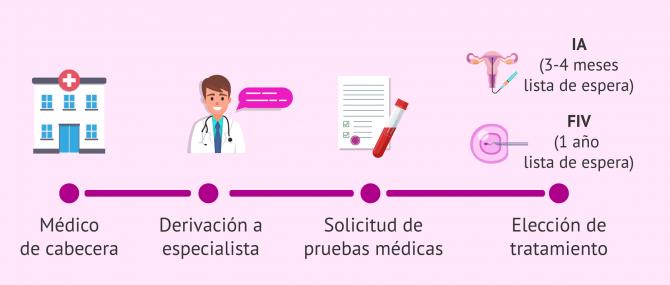 Imagen: Proceso de reproducción asistida en la Seguridad Social