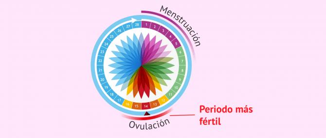 Imagen: Calendario de ovulación