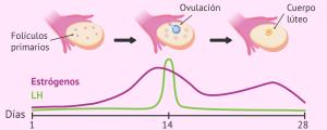 Ovulación desencadenada por el pico de LH