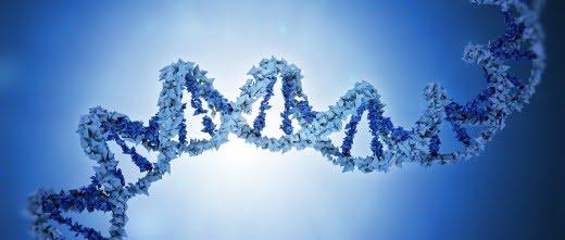 La enzima ADN polimerasa µ genera diversidad en las inmunoglobulinas del sistema inmune del feto