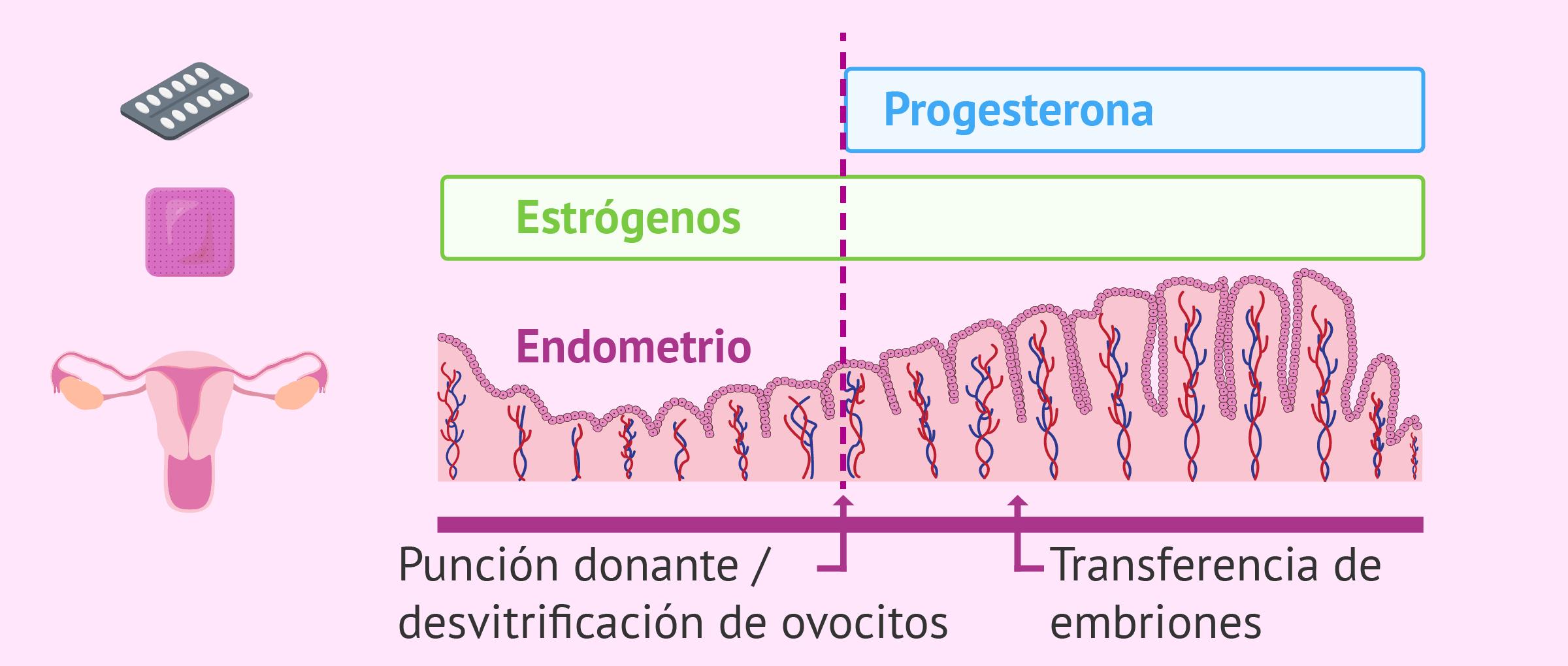 Preparación endometrial en la receptora de óvulos